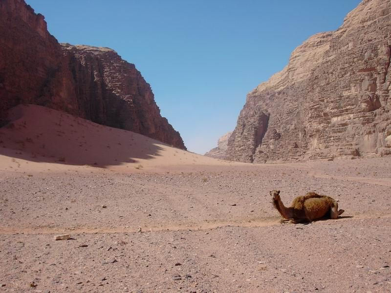 Chillin' with the Camel