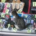 A cat selling shoes