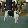 Tauranga - Milo the dog!!!