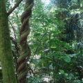 Nga Manu Jungle