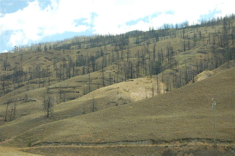 The lasting, blackened stumps of a wild fire in 2003