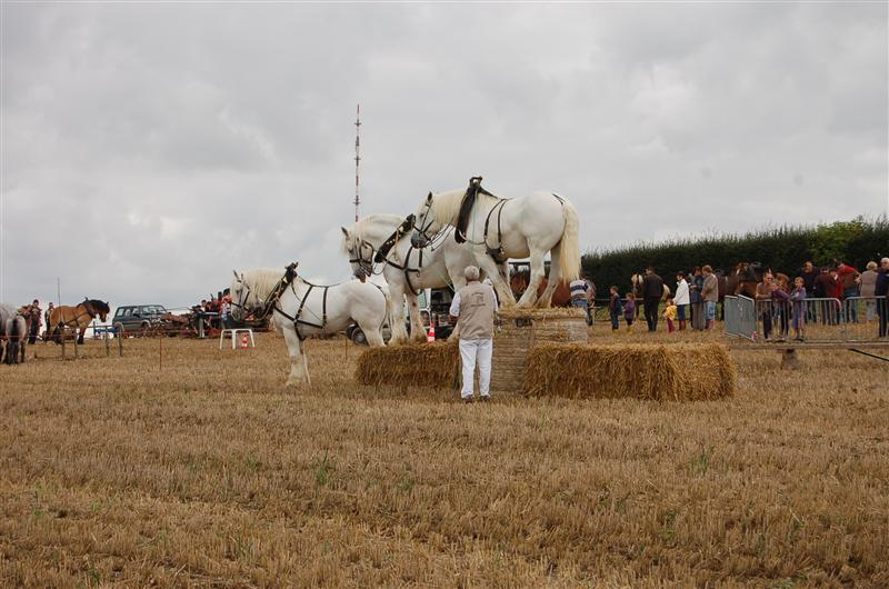 Draught horse display