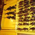 Scorpions I ate!!
