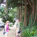 Cairns certainly was a tropical beauty... Dad and I standing by some vines hanging from a tree