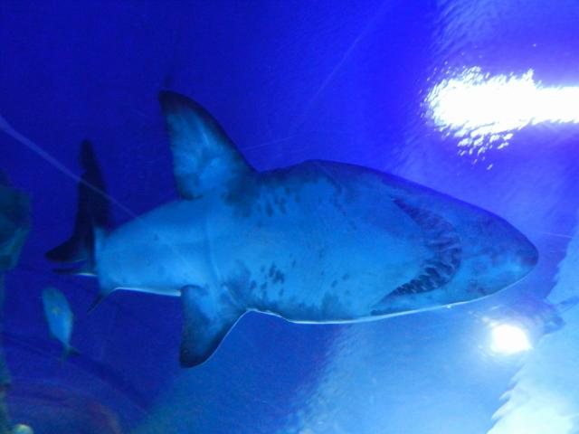 Underneath a shark