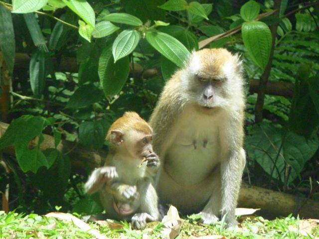 Scary Monkeys