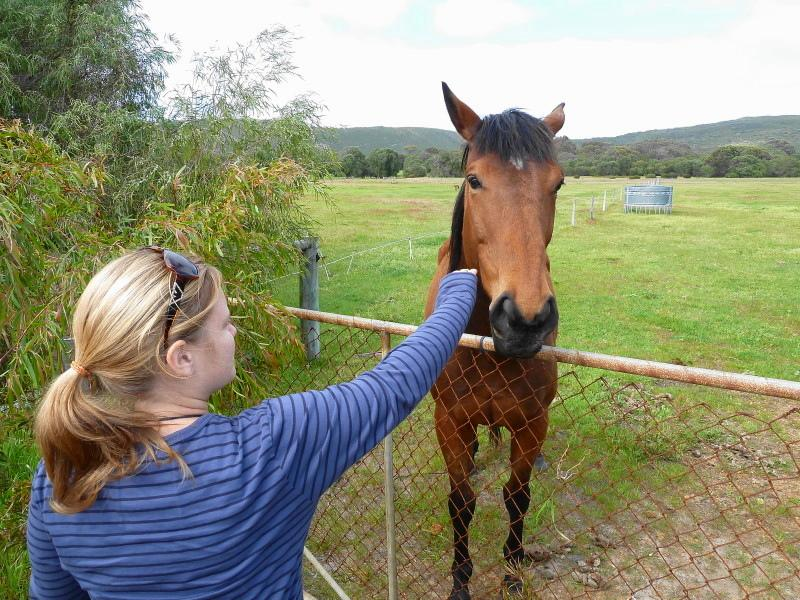 A very friendly horse