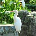 Hmmm, lets call it white bird !