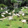Nice view of flamingos