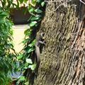 Lizard running up a tree