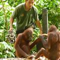 The guy feeding the orphaned orangutans
