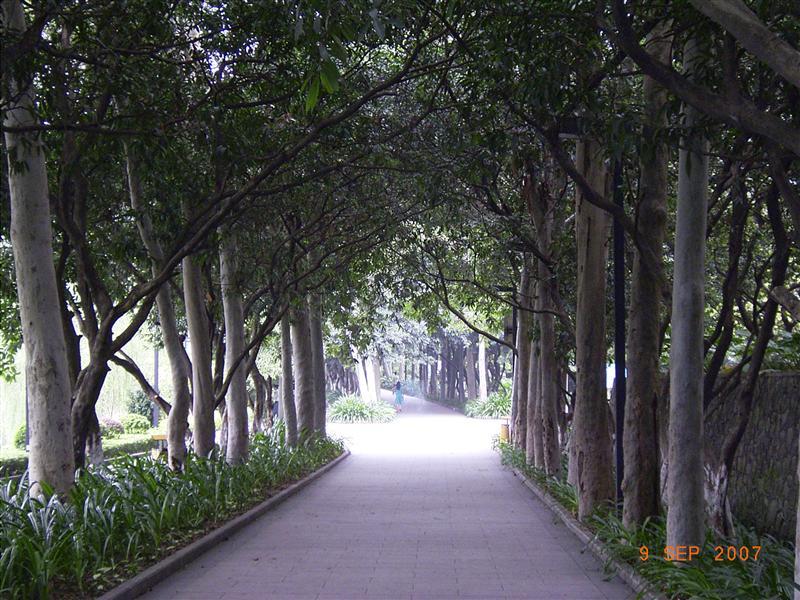 A tree lined street near the pool