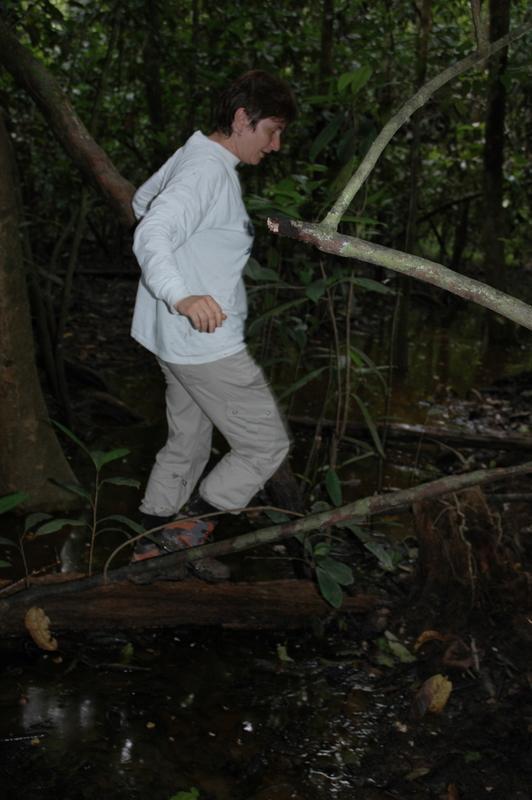 Jungle C