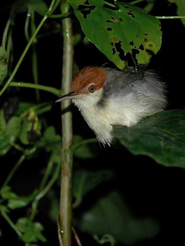 Very small bird