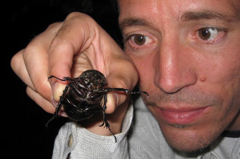Monsterbug