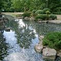Kyoto Japanese Garden, Holland Park
