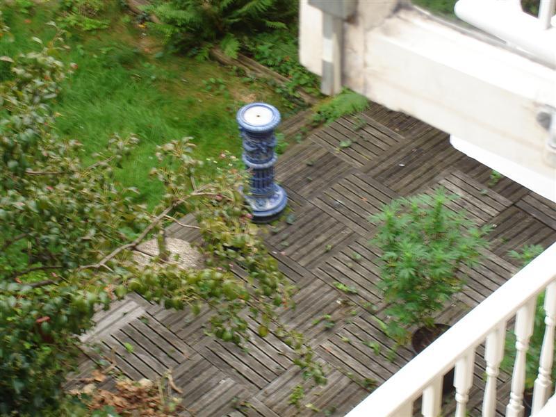 Notice the 'special' plant in the garden next door?