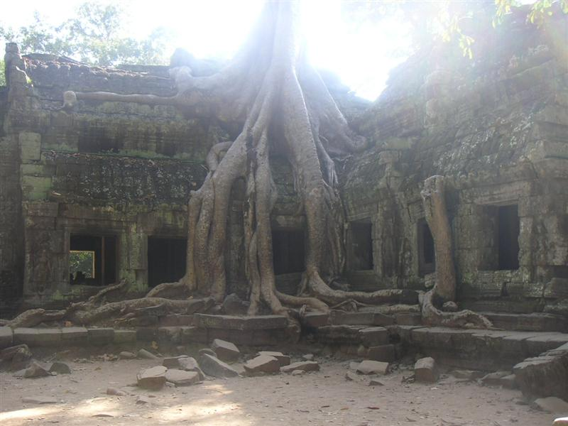Ta Prohm Temple, cool huh! (my fave temple)