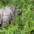 Shyno Rhino
