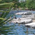 Penguins at Chester Zoo