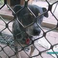 Host dog