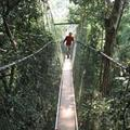 Flo on the canopy walk