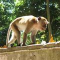 A monkey dodging broken glass