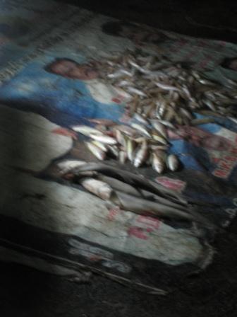 Fischmarkt, am Straßenrand auf Zeitungspapier (den Geruch hab ich immer noch in der Nase :/)