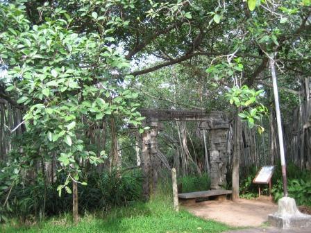 400 Jahre alter Banyan-Baum im Park der Theosophical Society (unter ihm finden bis zu 3000 Leute Schatten)