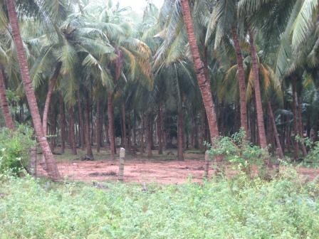 man sieht den Wald vor lauter Palmen nicht