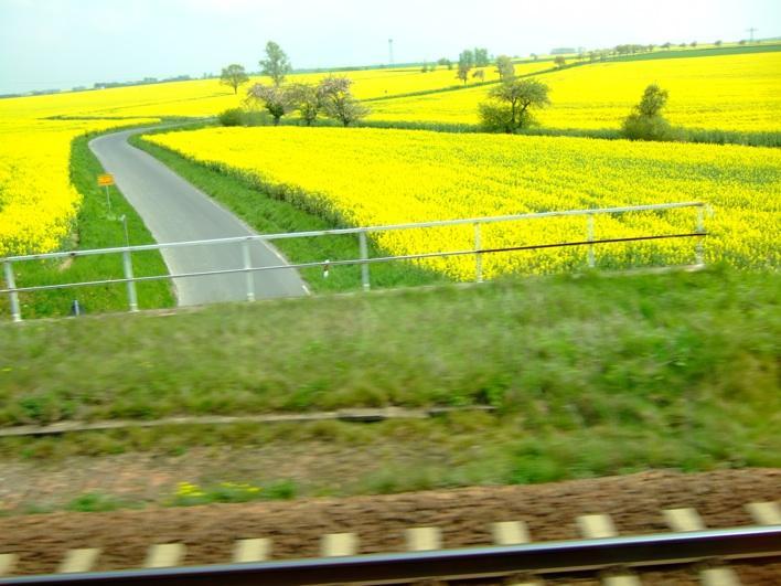 fields of flowers - taken on train