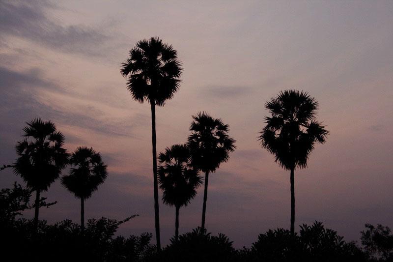 Sadhana Sunsets