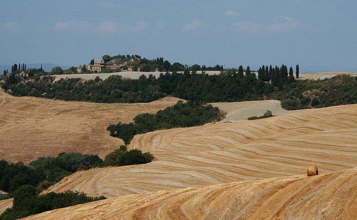 Freshly mowed wheat fields