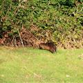 River otter we spoted grazing alongside a road driving one day