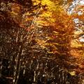 Fall foliage on the slopes of Mont Amiata