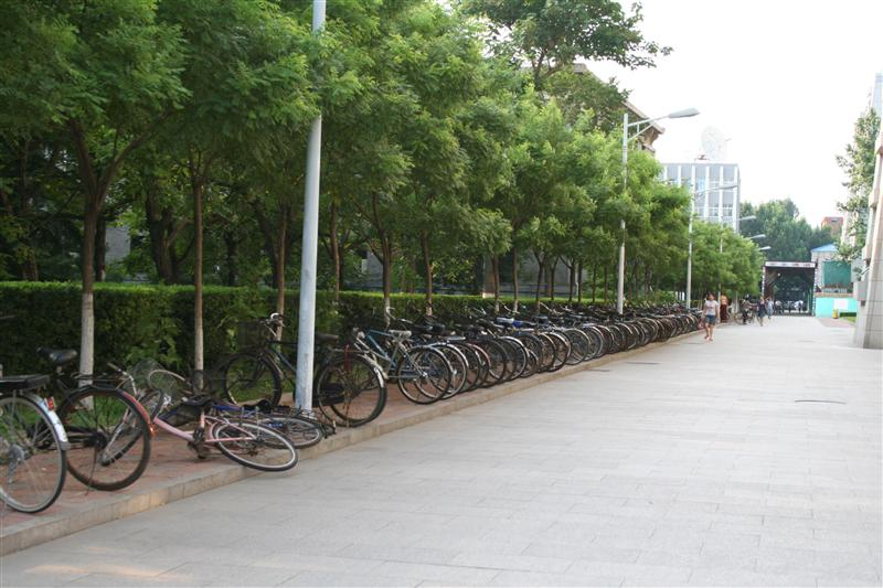 lots o bikes