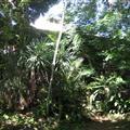 Mi casa! Vanuit de tropische achtertuin