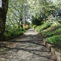 Pathway in Regent Gardens