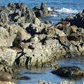 Red Rock Seal Colony