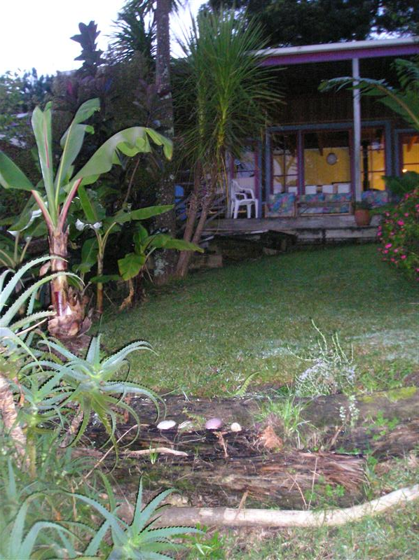 The garden at our hostel
