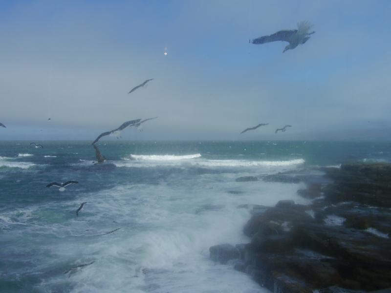 Sea gulls wind surfing!
