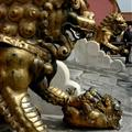 lions in the forbidden city