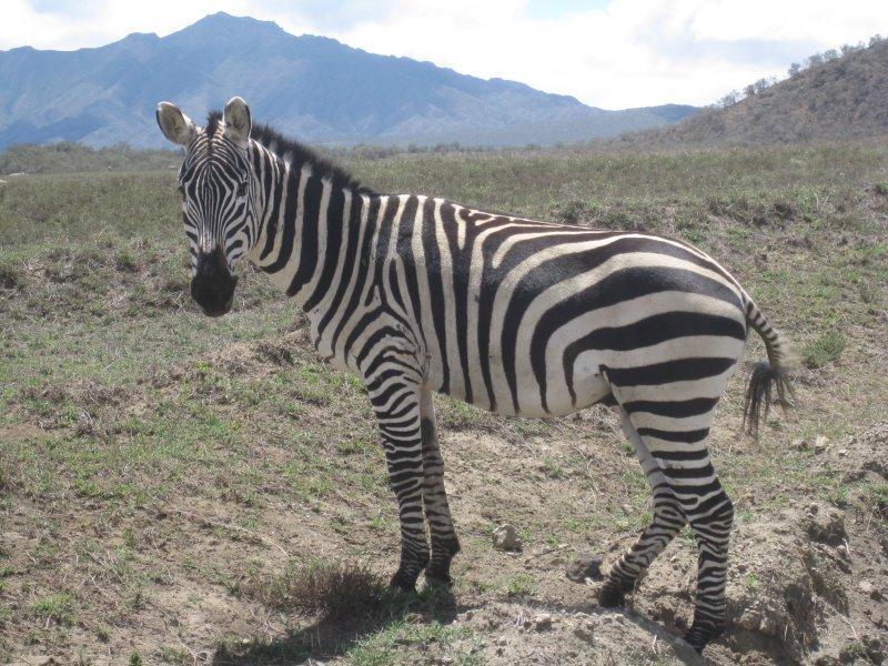 Black with white stripes, or white with black stripes