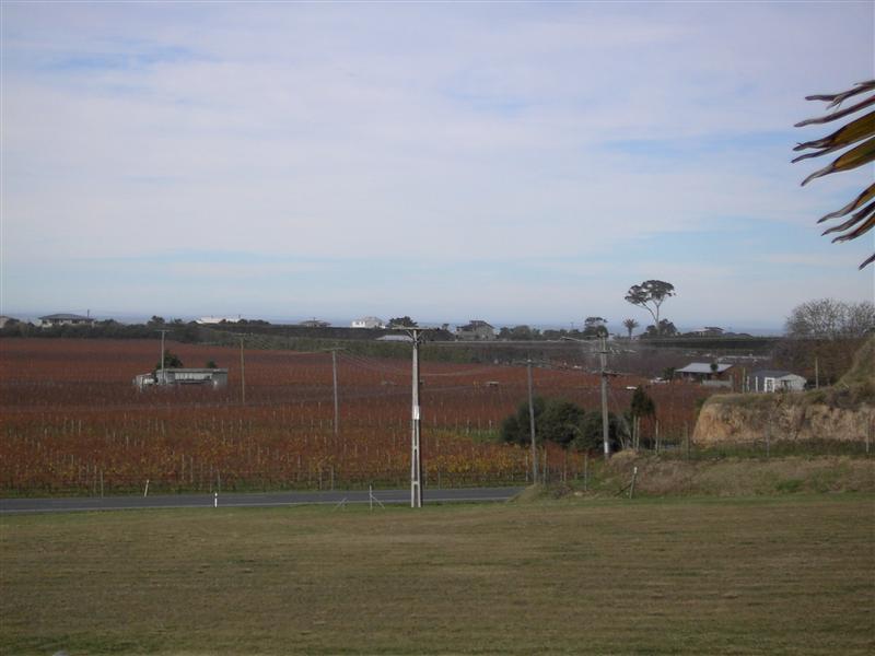 View of Wishart Vineyards - Bach