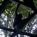 Monkey see, monkey pees