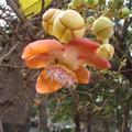 Mumbai Flower