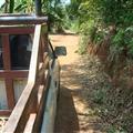 Chiang Mai - Fahrt mit dem Jeep