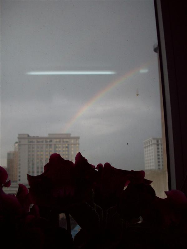the flower and the rainbow