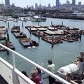 Sea lions at Fisherman's Wharf - moved here after the earthquake of 1989