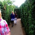 Hedge Maze!  I felt like Harry Potter.